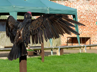 Thirsk Falconry Centre