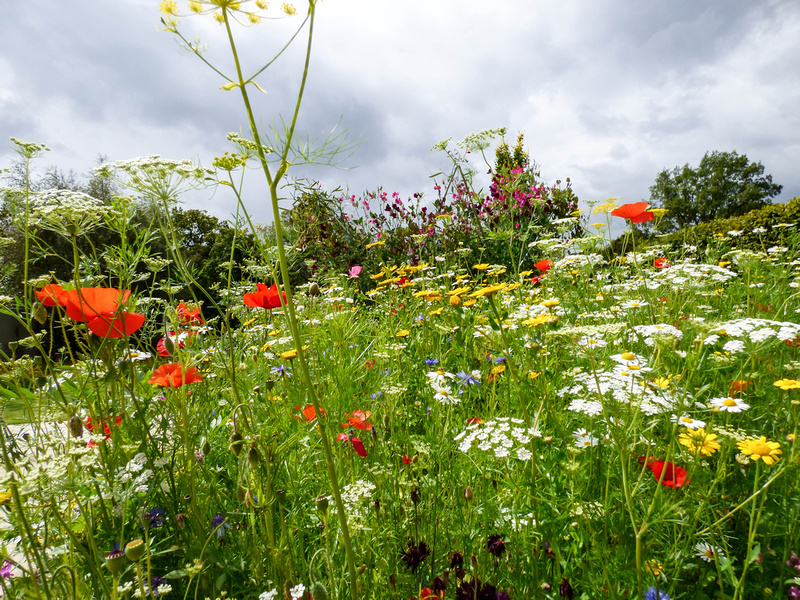 RHS Harlow Carr 15 August 2014